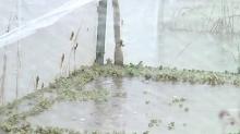 益阳:种养业被淹损失惨重