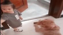 《爸爸去哪儿第四季》候选萌娃:喜欢和狗狗玩的小姑娘 怎么可以这么萌