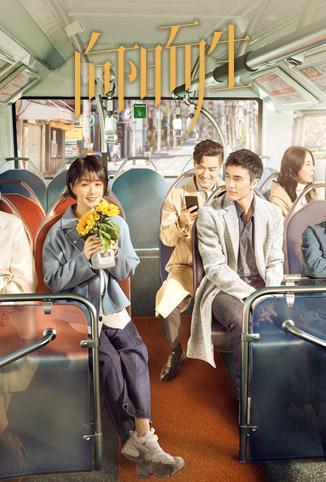 向阳而生 DVD版