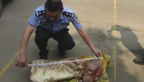 """追踪""""狮子肉"""":警方获得线索 有人贩卖老虎肉"""