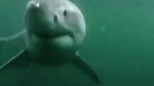 【大咖笑料】太惊险!被大白鲨追击后的各种囧态