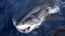 神秘消失的大白鲨