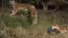 <B>动物</B>闯祸人之过:<B>老虎</B>咬人事件 责任如何划分