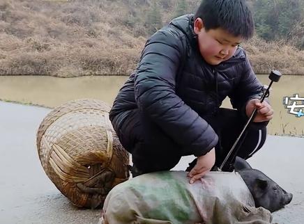 第21期:赵小果在线哄猪
