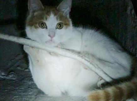 堕入20米深井的绝望猫咪