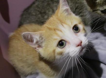 老猫看见小猫这个橘色疯了