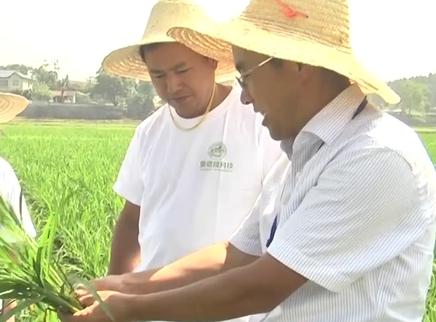 2019国际稻作发展论坛6月下旬在长举行