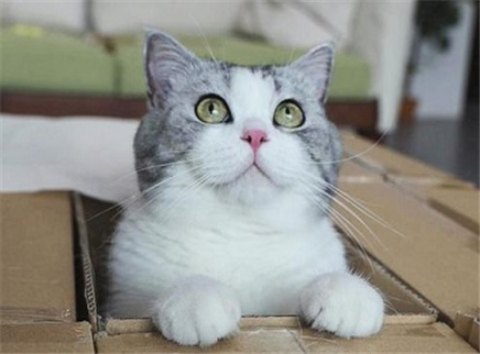 铲屎官自制陷阱诱捕馋猫