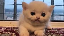 生气的小奶猫!