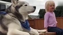音量预警!大狗狗和小女孩对吼