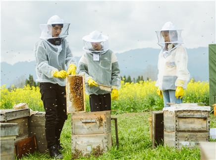 第6期:蜂场采蜜王源惨被蛰
