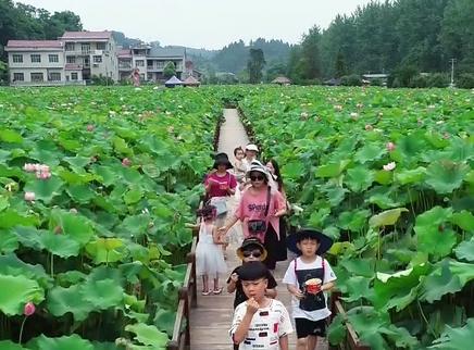 湖南公布首批十个农业特色小镇